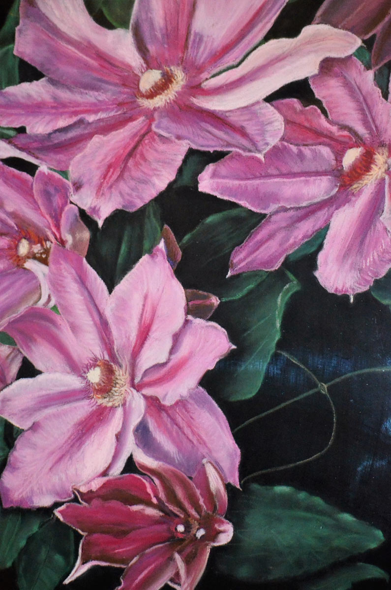 Clematis - Painting by Sandra Cattermole