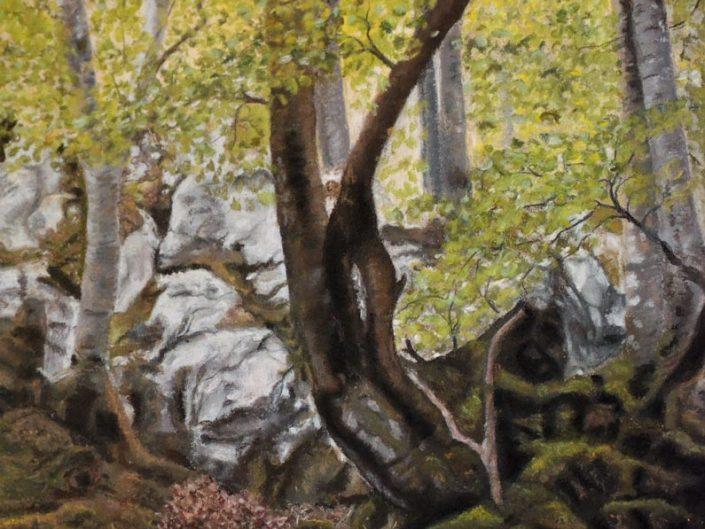 Beech Tree Meadow